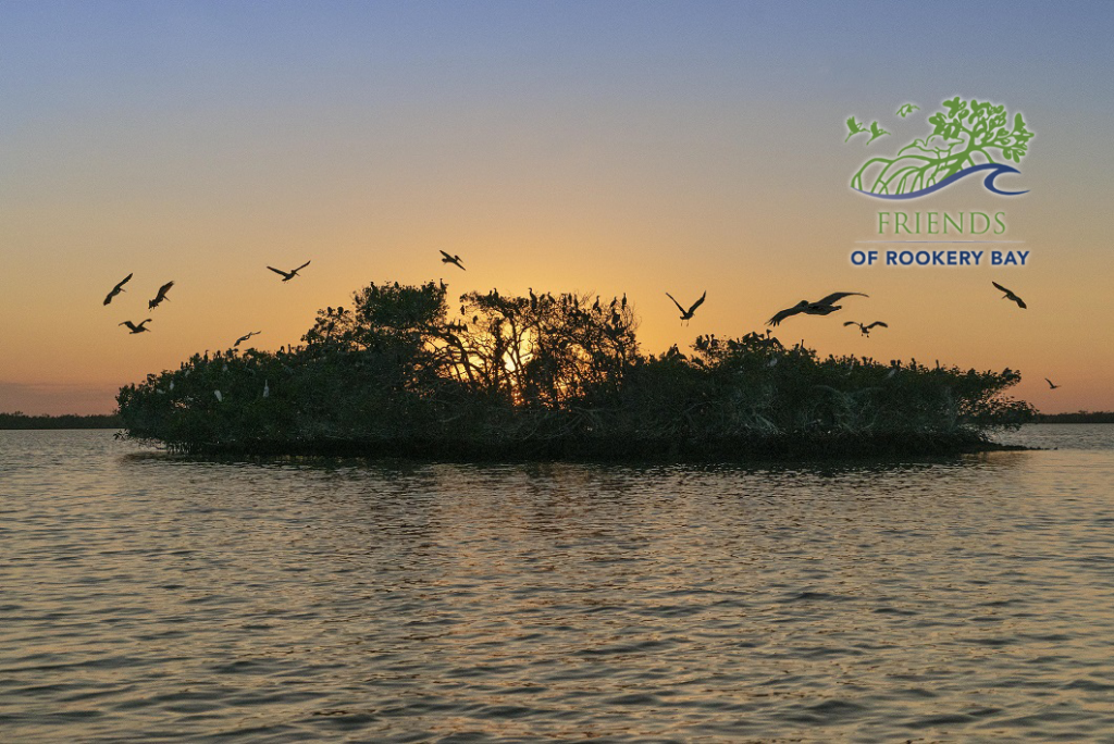 FORB Logo | Bird Rookery Island in Rookery Bay Research Reserve | Elam Stoltzfus | Zoom Gallery