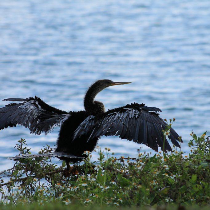 Virtual Binoculars | National Estuaries Week | Rookery Bay Research Reserve