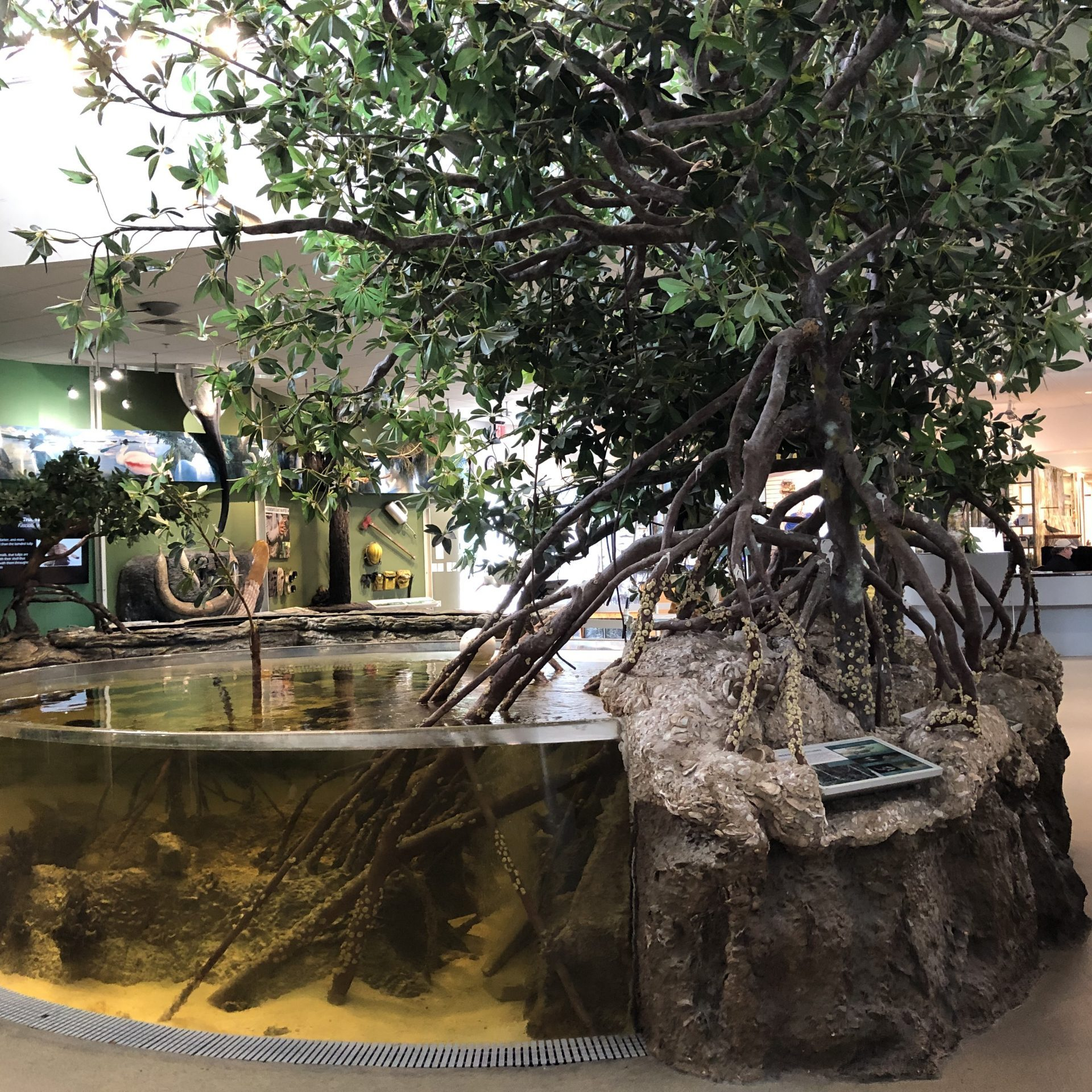 Rookery Bay Environmental Learning Center | Exhibits and Aquariums