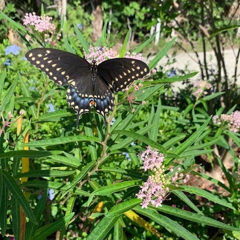 Rookery Bay Butterfly Garden | Environmental Learning Center Visit | Volunteer