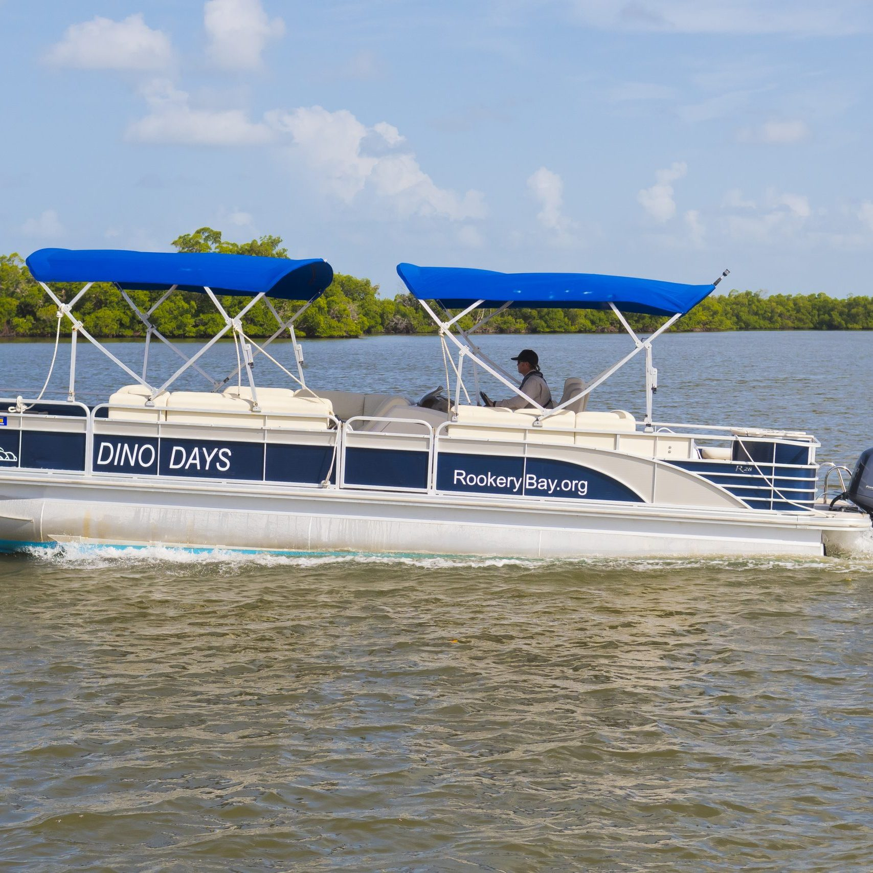 Dino Days Boat Tour | Ecotours | Rookery Bay National Estuarine Research Reserve