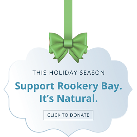 This Holiday Season-Click to Donate | Rookery Bay Research Reserve
