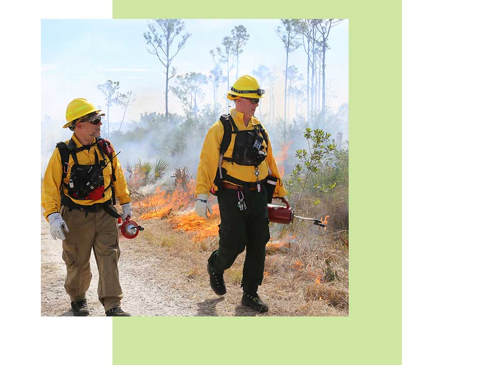 Prescribed Burns | Rookery Bay Research Reserve