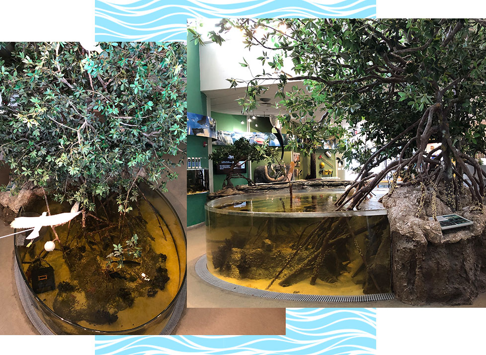 Aquarium Assistant | Volunteer | Environmental Learning Center | Rookery Bay Research Reserve
