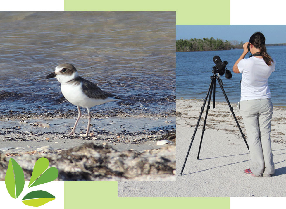 Birds of the Beach | Classes at Rookery Bay National Estuarine Research Reserve
