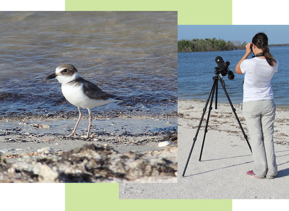 Birds of the Beach | Rookery Bay Research Reserve