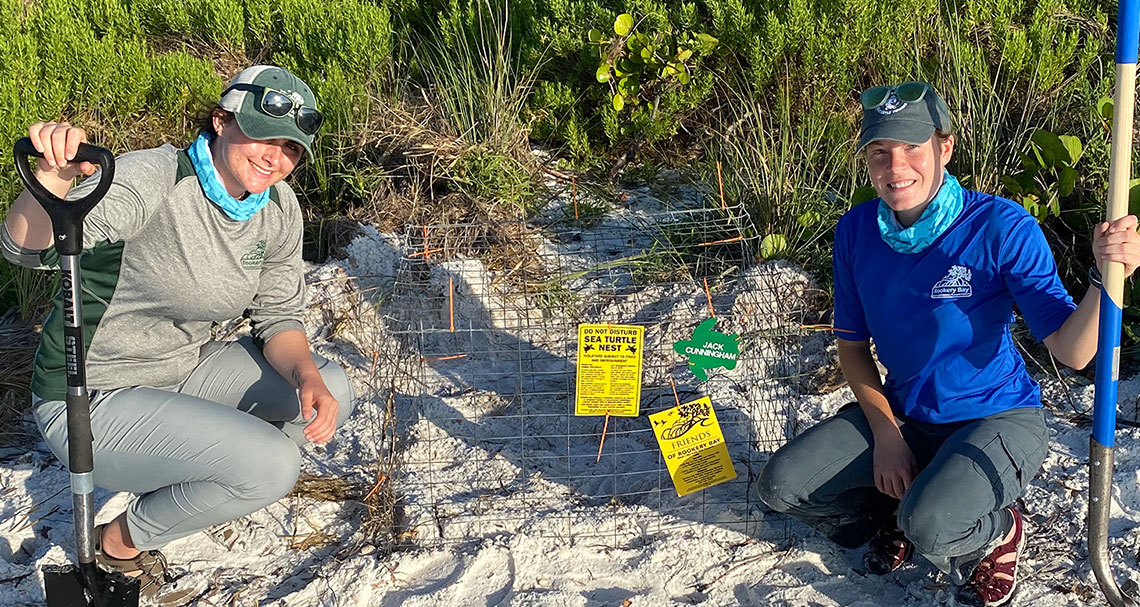 field note | summer turtle inters | rookery bay research reserve