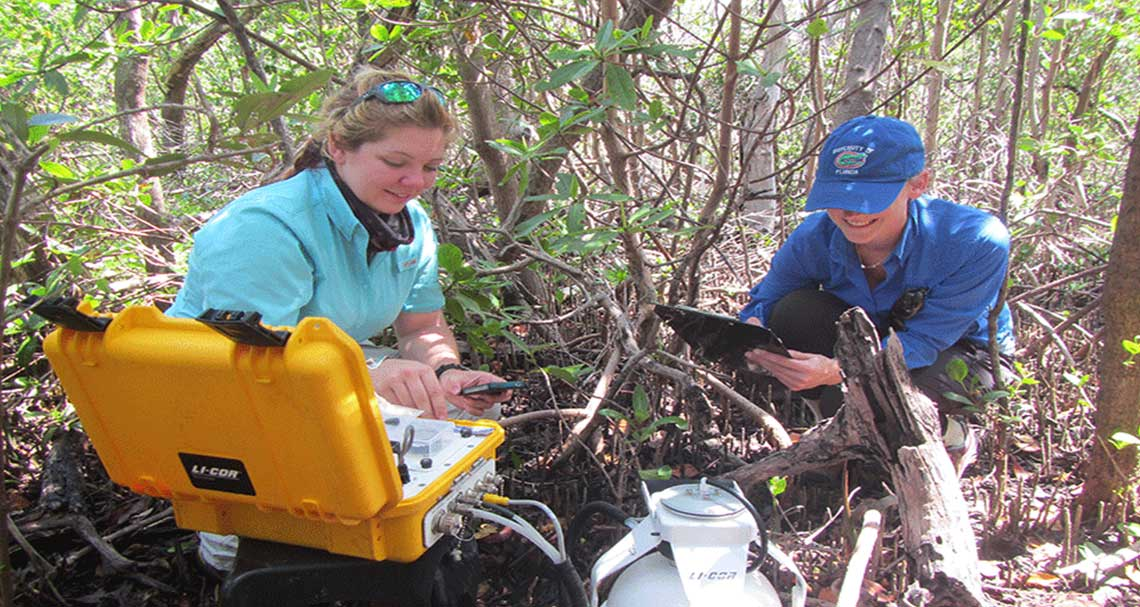 Coastal Inundation in Naples | Rookery Bay Research Reserve