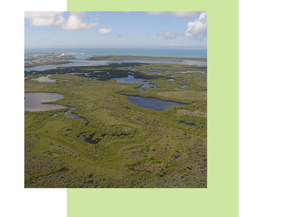 Continued Purchasing | History | Rookery Bay Research Reserve
