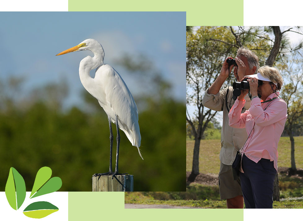 Ebird Challenge with Rookery Bay | Festival of Birds | Rookery Bay Research Reserve