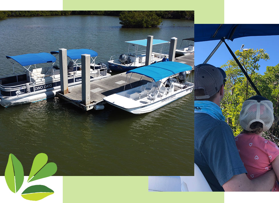 Boat Tours | Eco-Tours | Main Image | Dolphins and Manatees | Rookery Bay Research Reserve