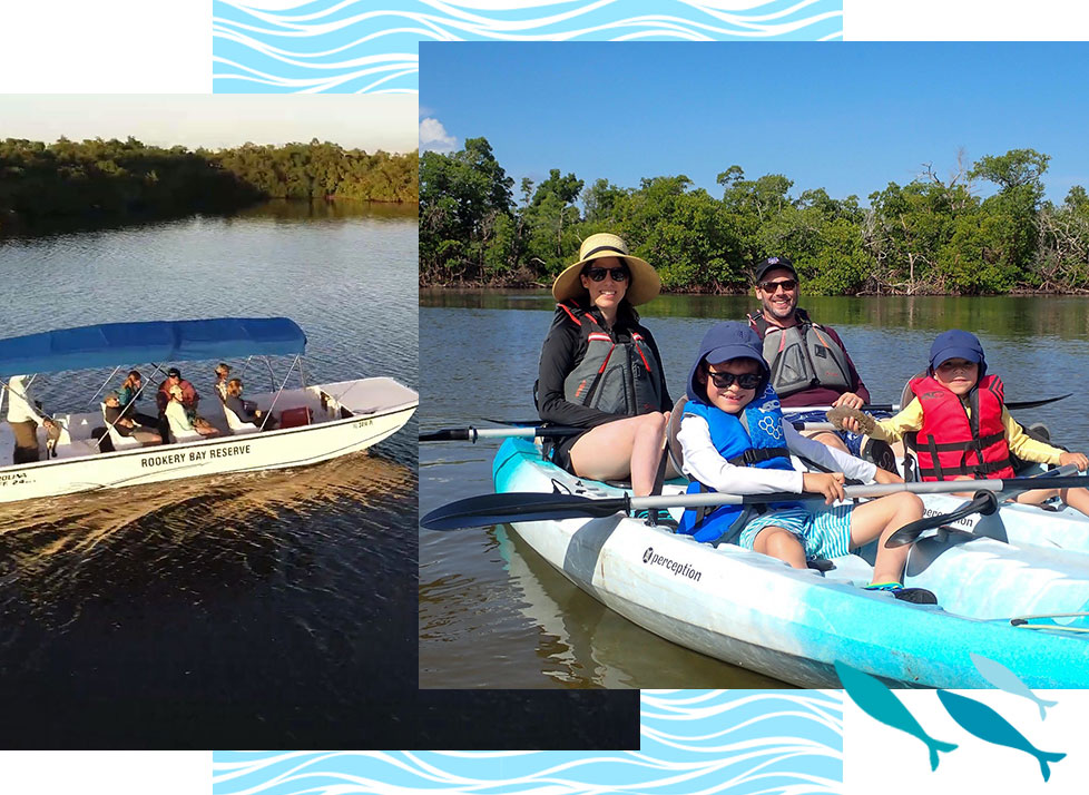 Eco-Tours | Boat and Kayak | Rookery Bay Research Reserve