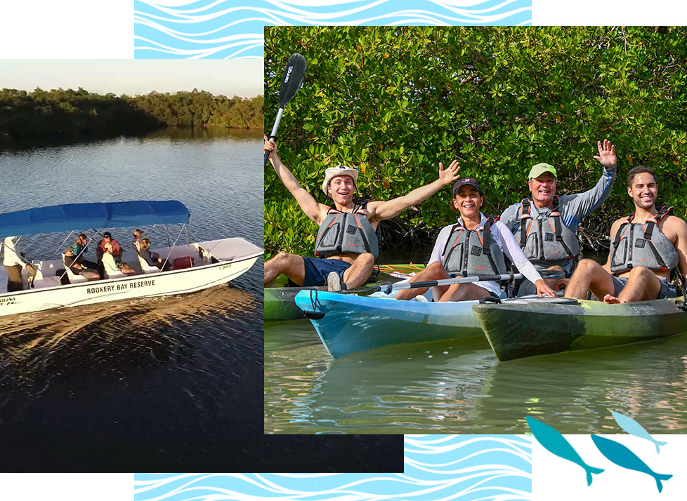 Eco-Tours | Boat and Kayak Tours | Kayak Rentals | Rookery Bay Research Reserve