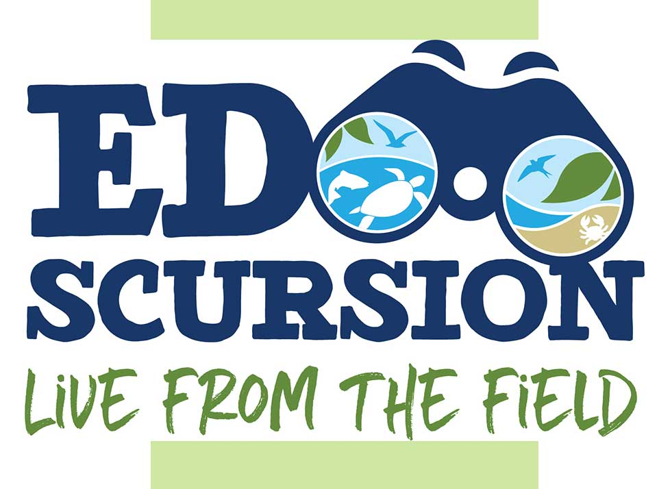 Edscursion Live from the Field | Lectures and Classes | Rookery Bay Research Reserve