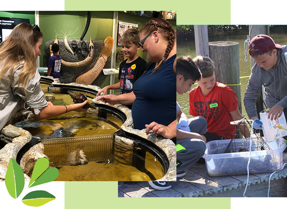 Educational opportunities include the Estuary Encounter Touch Tank at Rookery Bay Research Reserve | National Estuarine Research Reserve