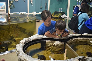 Rookery Bay Environmental Learning Center | Rookery Bay National Estuarine Research Reserve