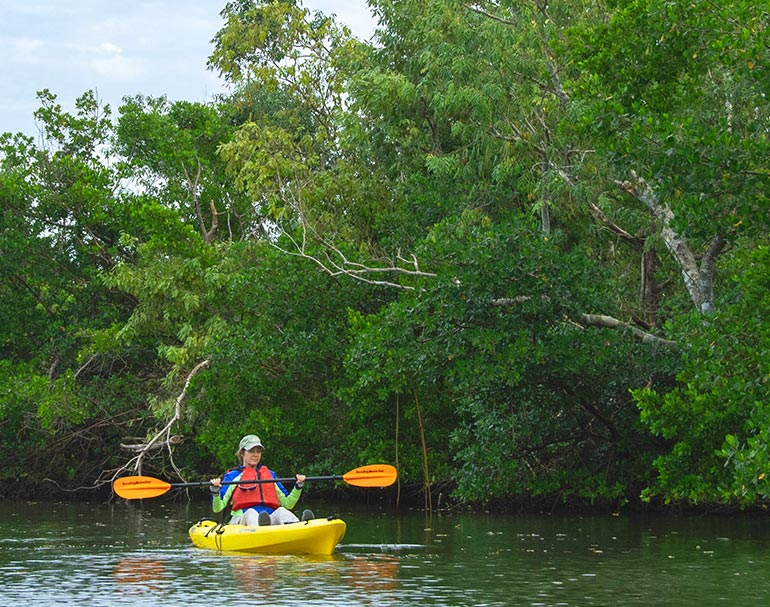 Guided Kayak Tours of Rookery Bay | National Estuarine Research Reserve