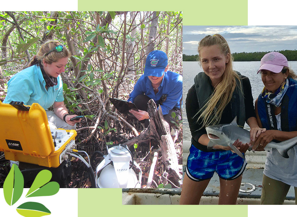 Research at Rookery Bay | National Estuarine Research Reserve