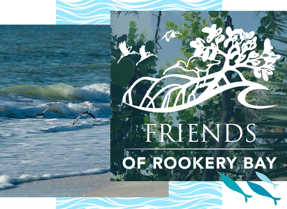 Friends of Rookery Bay Logo over images of Rookery Bay | National Estuarine Research Reserve