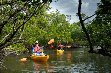Rookery Bay Kayak Tours | Rookery Bay National Estuarine Research Reserve
