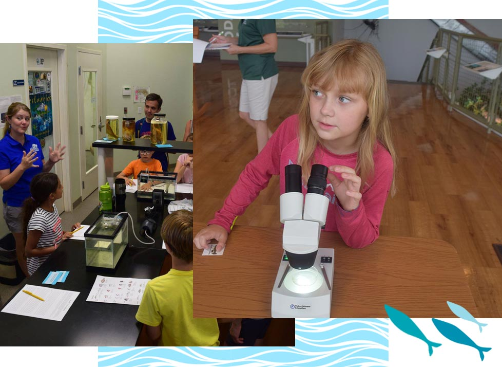 Events for Home School Students at Rookery Bay   National Estuarine Research Reserve