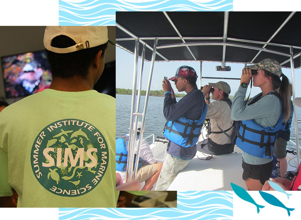 Summer Institute for Marine Life at Rookery Bay | National Estuarine Research Reserve