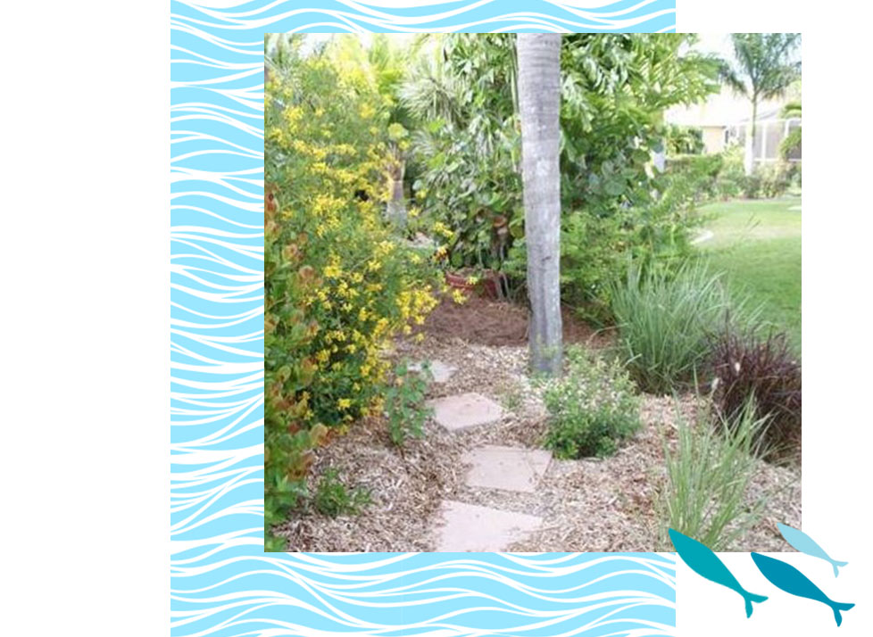 Landscaping Certification in Naples | Rookery Bay Research Reserve
