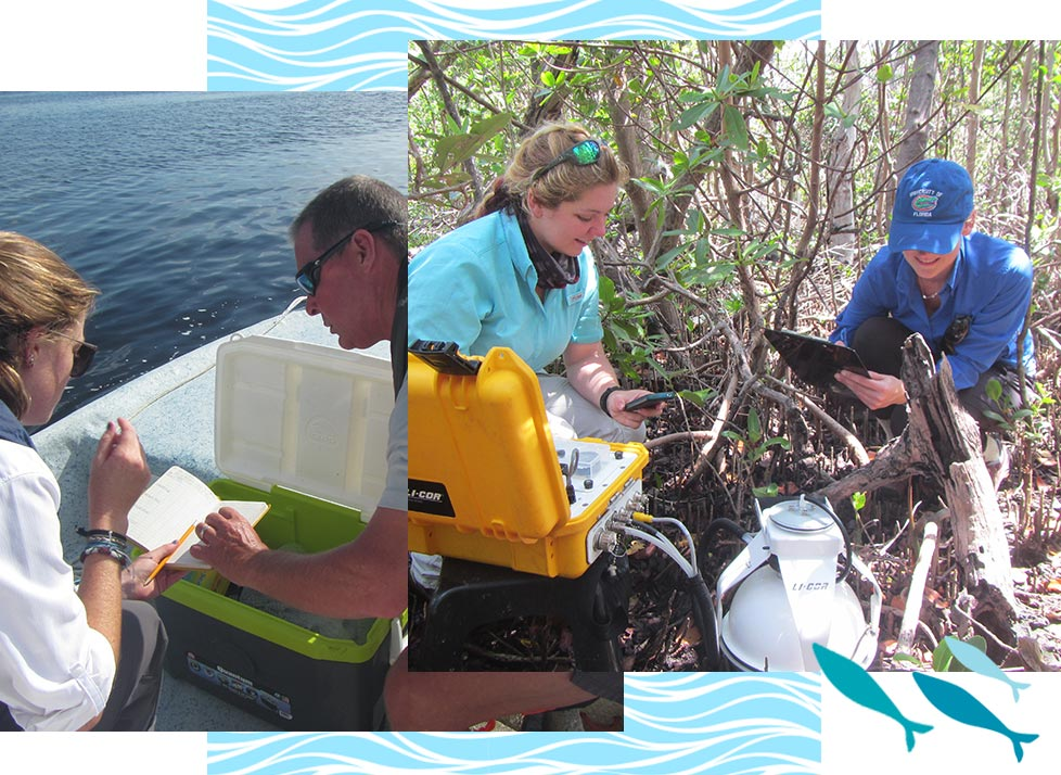 Research performed at Rookery Bay Research Reserve | National Estuarine Research Reserve