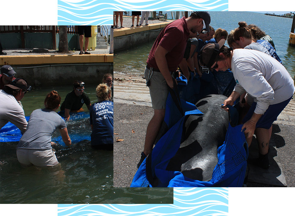 Marine Mammal Stranding | Rookery Bay Research Reserve