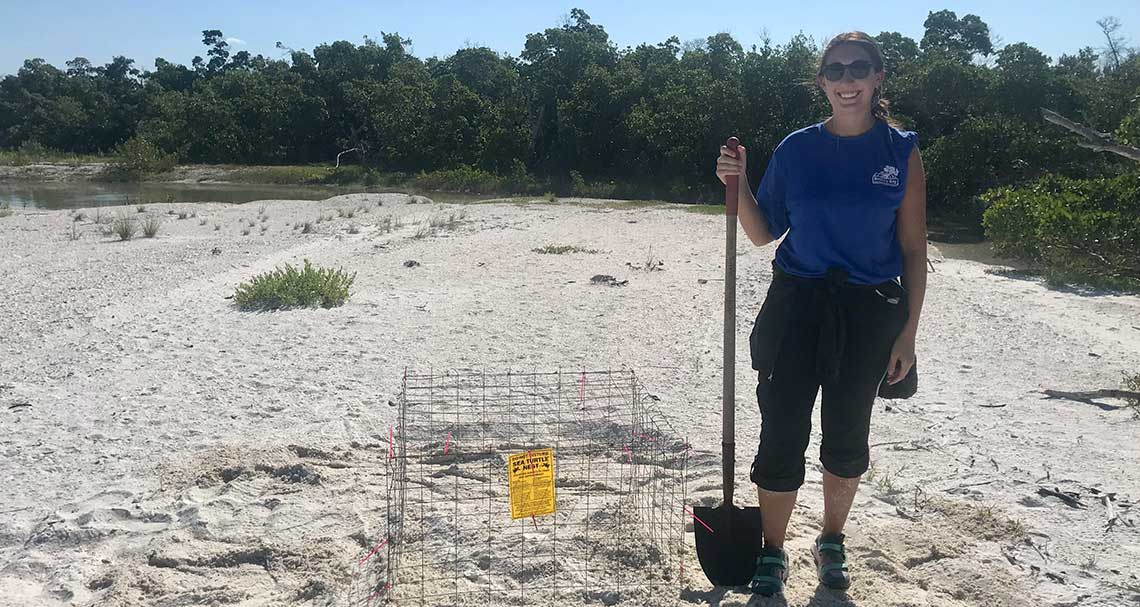 Sea Turtle Nesting Season Begins | Rookery Bay Research Reserve