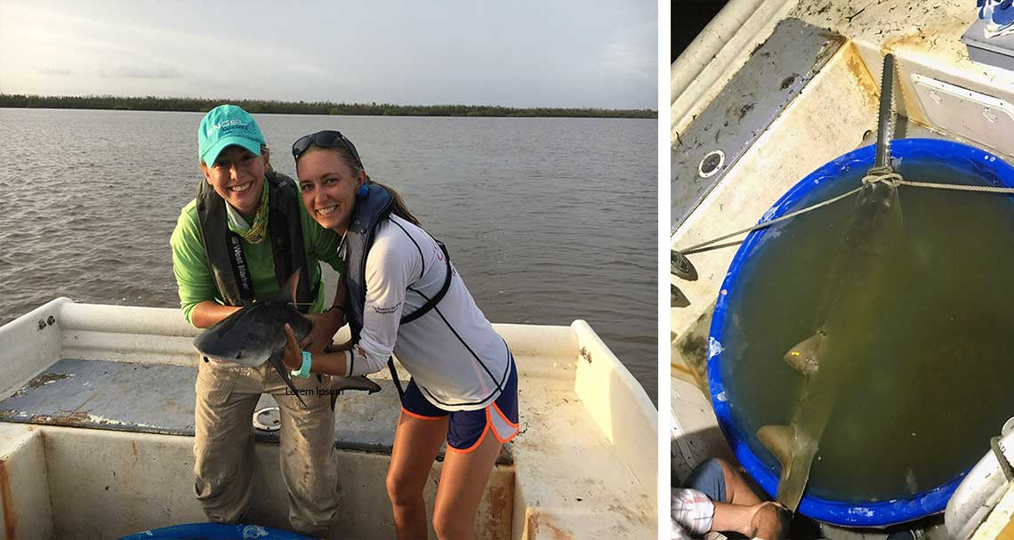 Shark Research in Naples | Rookery Bay Research Reserve