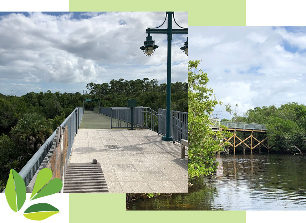 Observation Bridge at Rookery Bay Environmental Learning Center | Rookery Bay Research Reserve