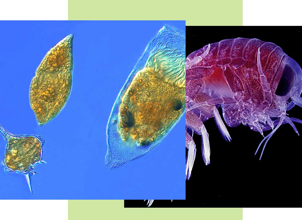 Plankton at Rookery Bay Research Reserve | National Estuarine Research Reserve