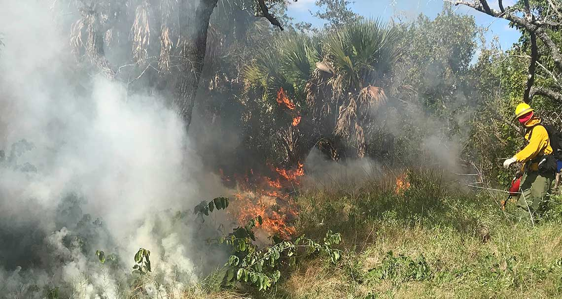 Prescribed Fire | News | Rookery Bay Research Reserve