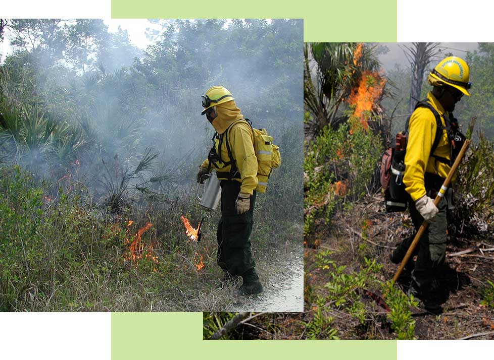 Prescribed Fires | Rookery Bay Research Reserve