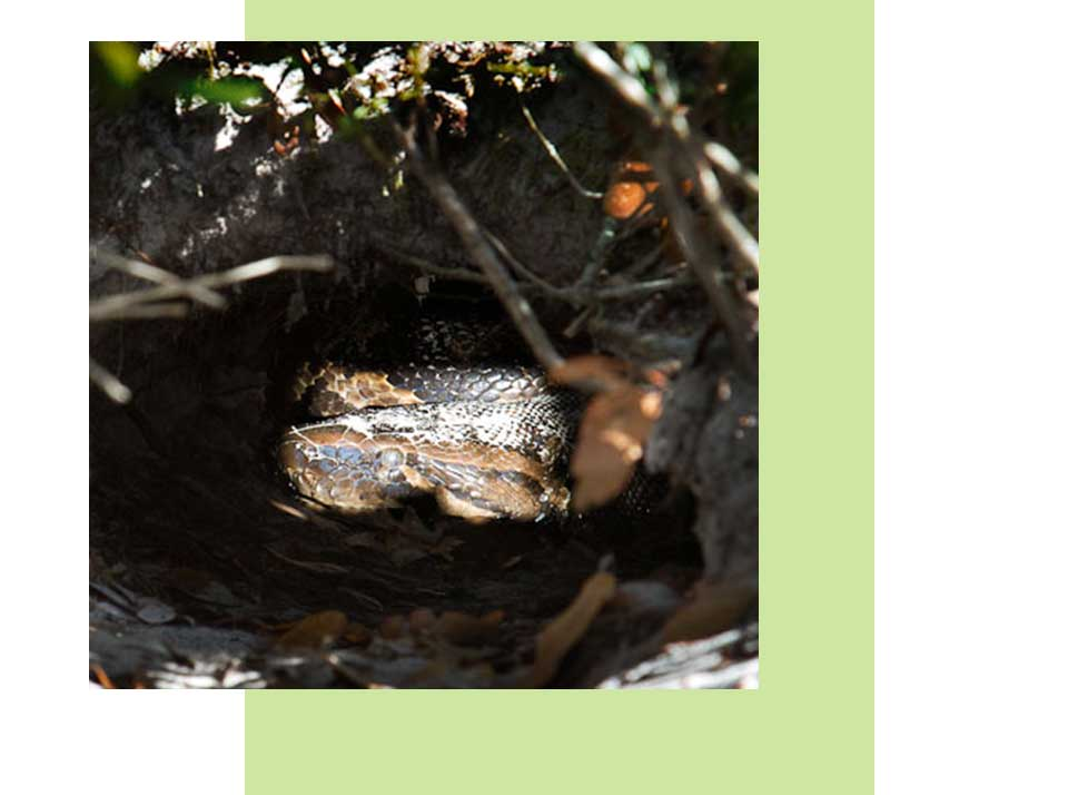 Python Monitoring | Rookery Bay Research Reserve