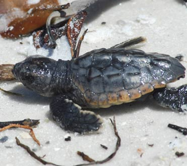 Wildlife at Rookery Bay Research Reserve: Reptiles & Amphibians | National Estuarine Reserve