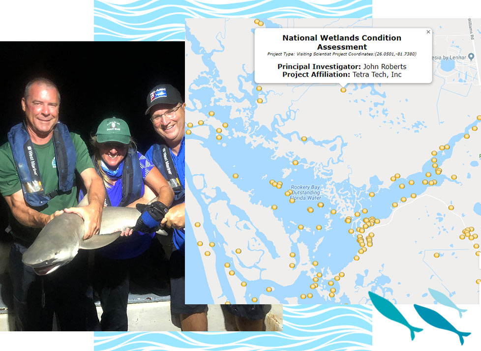 Visiting Scientists at Rookery Bay Research Reserve | National Estuarine Research Reserve