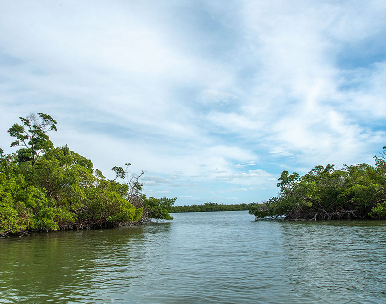 Water and Mangrove views of Rookery Bay Research Reserve | National Estuarine Research Reserve