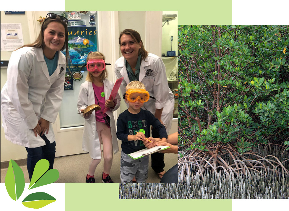 Donate to Rookery Bay's Red Mangrove Society | Rookery Bay Research Reserve