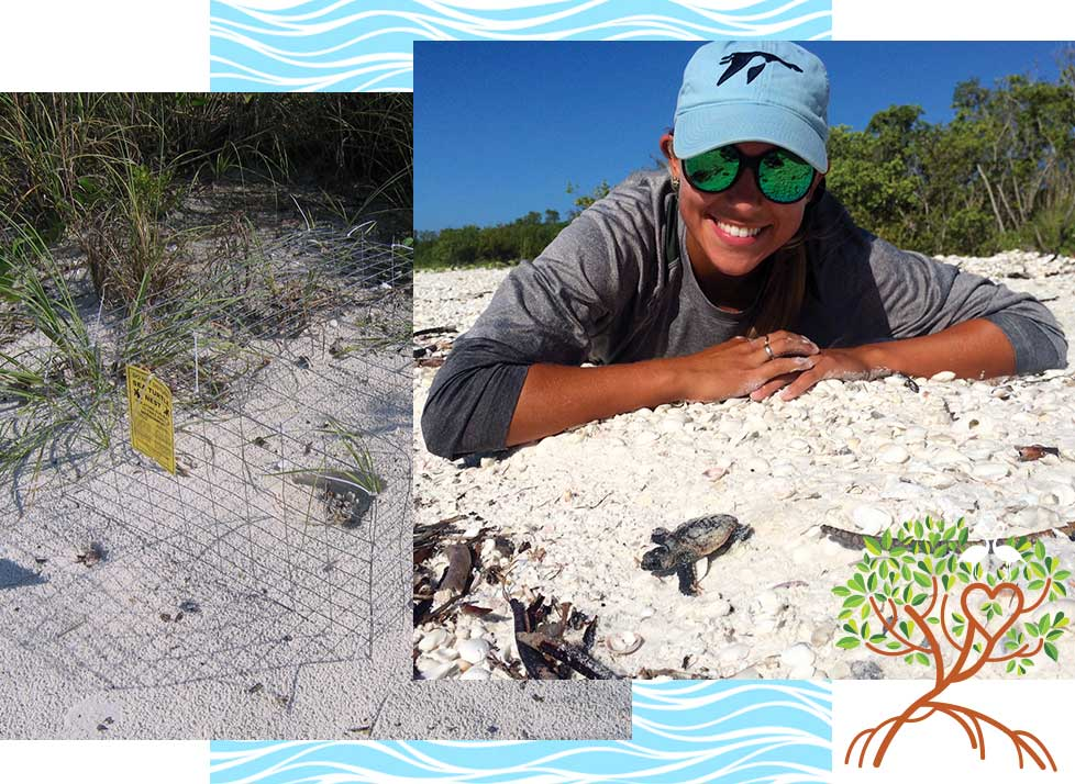 Adopt a Sea Turtle Program | Rookery Bay Research Reserve