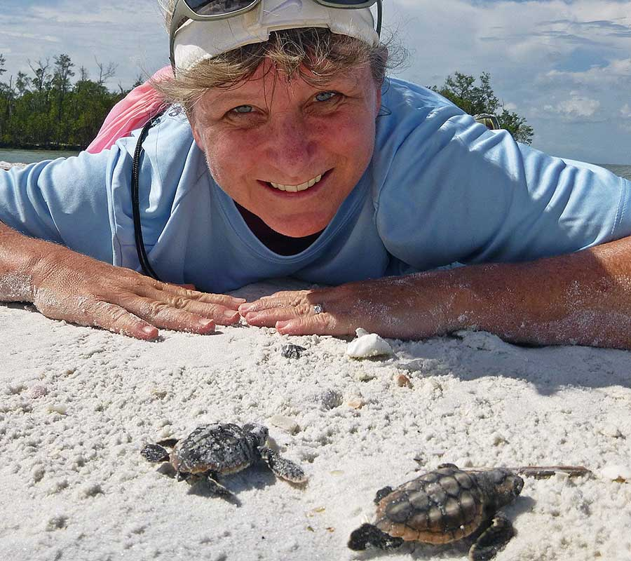 Register for Sea Turtle Lunch and Learn | Rookery Bay Research Reserve