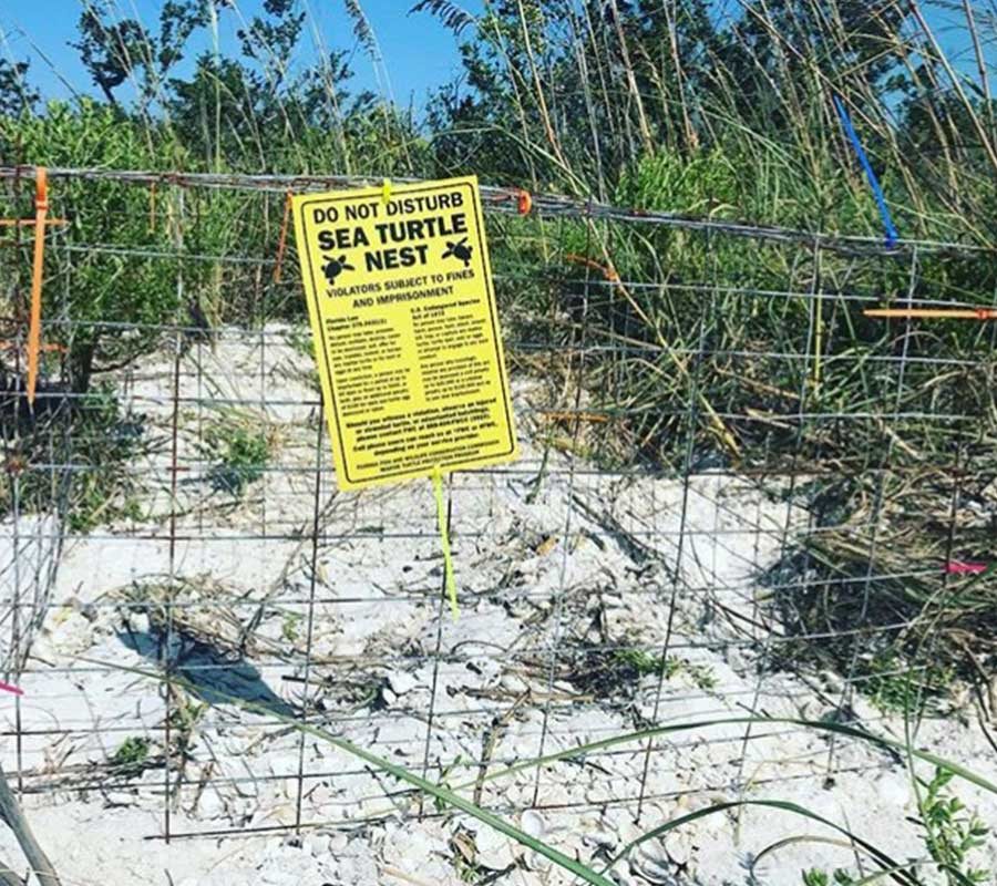 Sea Turtle Nest in Naples | Rookery Bay Research Reserve
