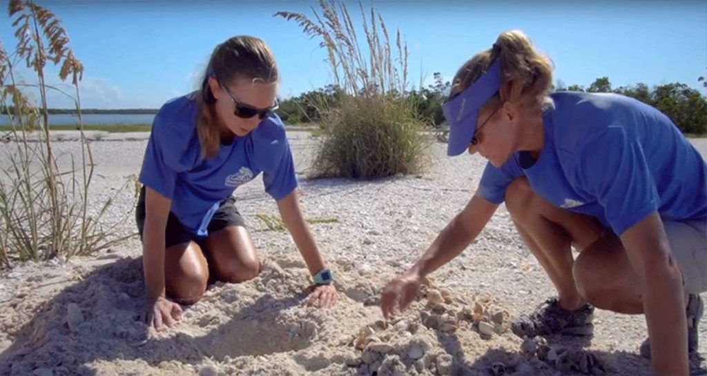 Sea Turtle Hatching in Naples | Rookery Bay Research Reserve