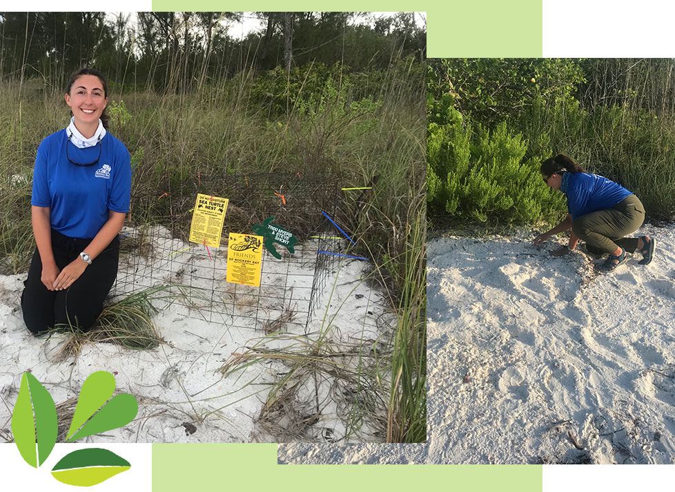 Sea Turtle Internship | Careers | Claire | Rookery Bay Research Reserve