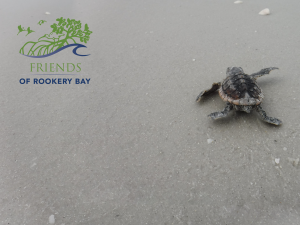 Sea Turtle | FORB logo | Zoom Gallery