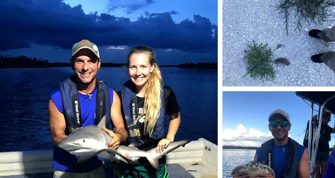 Sea Turtle, Sharks and Skimmers in Naples | Rookery Bay Research Reserve