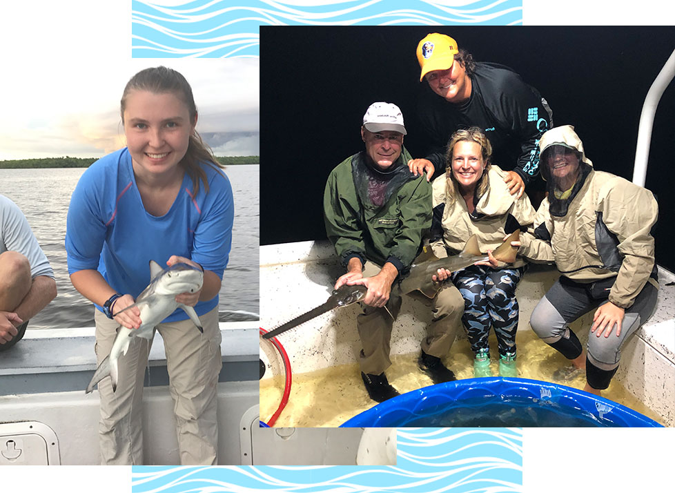 Internships | Shark Monitoring and Shark Tagging | Rookery Bay Research Reserve