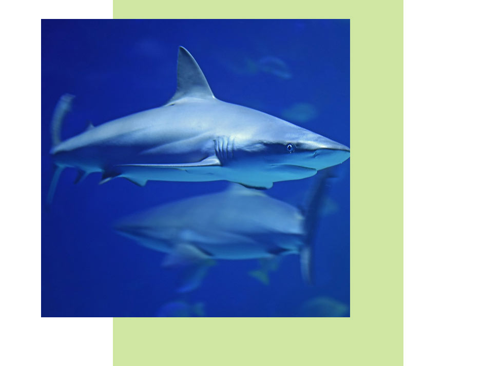 Sharks Wildlife in Naples | Rookery Bay Research Reserve