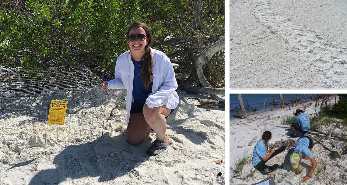 Turtle Nesting Season 2019 in Naples | Rookery Bay Research Reserve